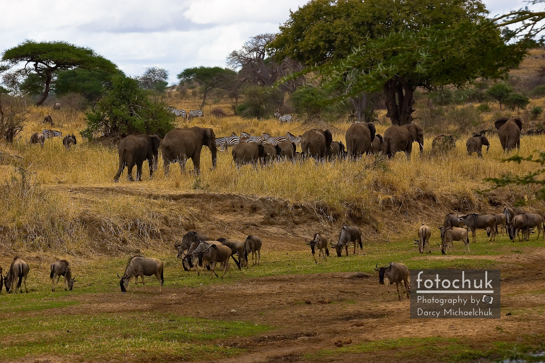 African Herds on the Move