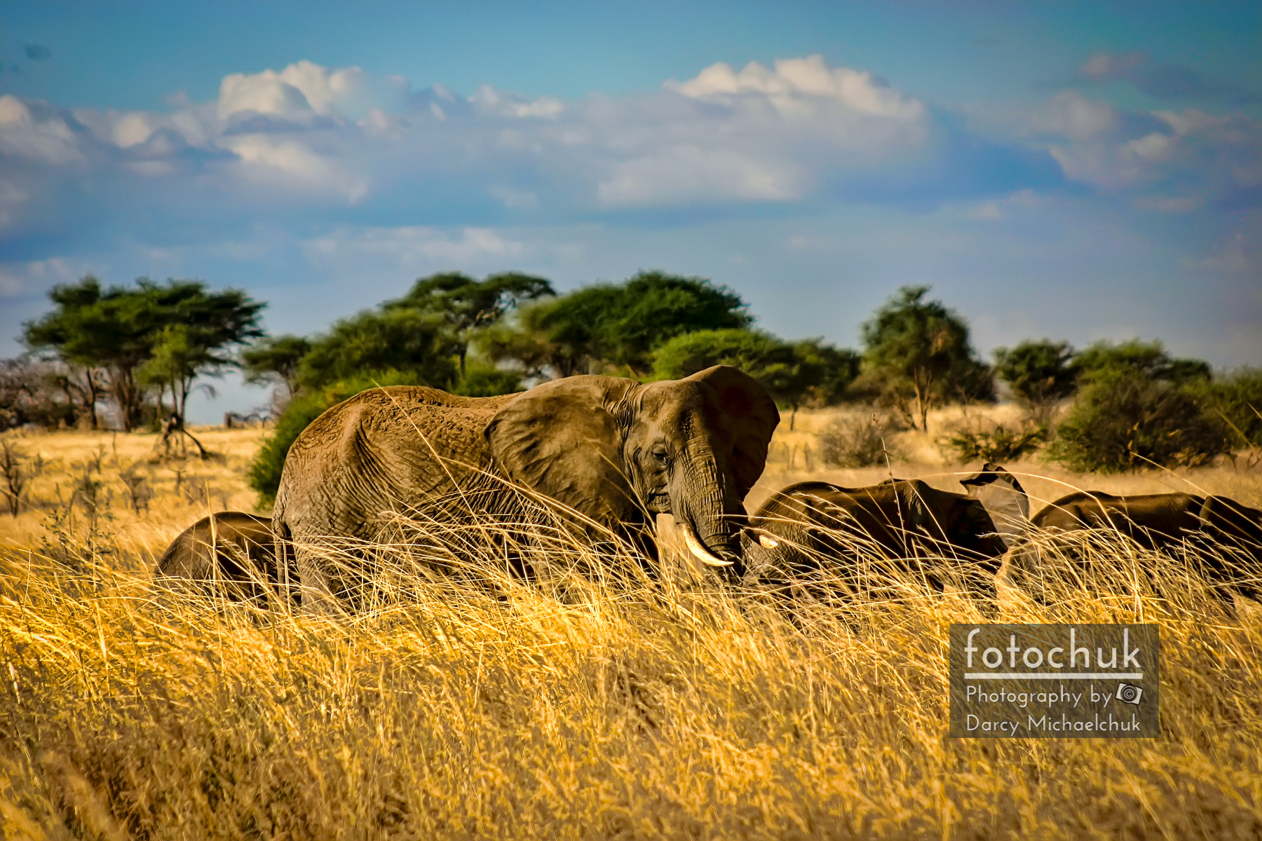 Elephant Family in the Grass