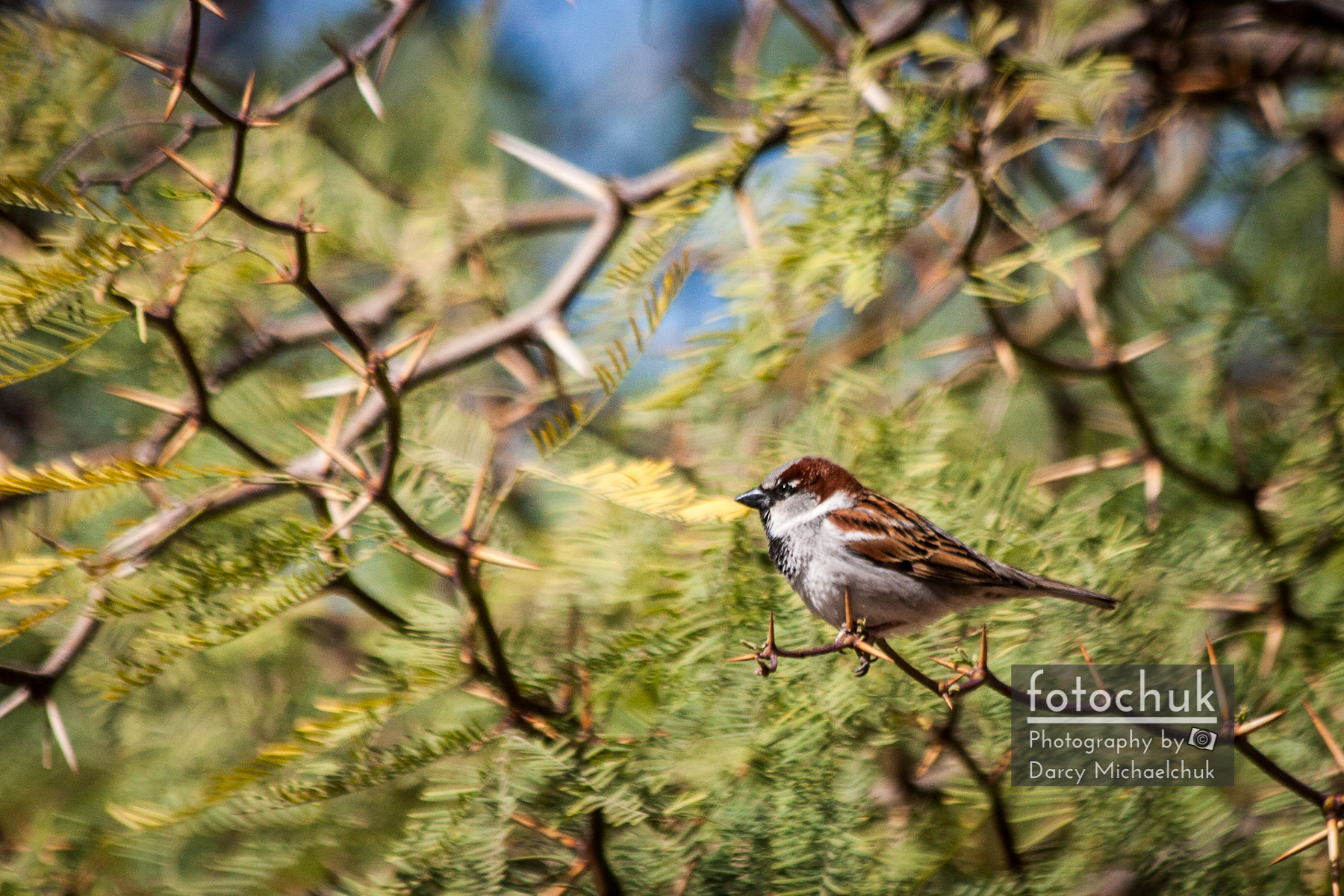 Finch in Swaying Branches