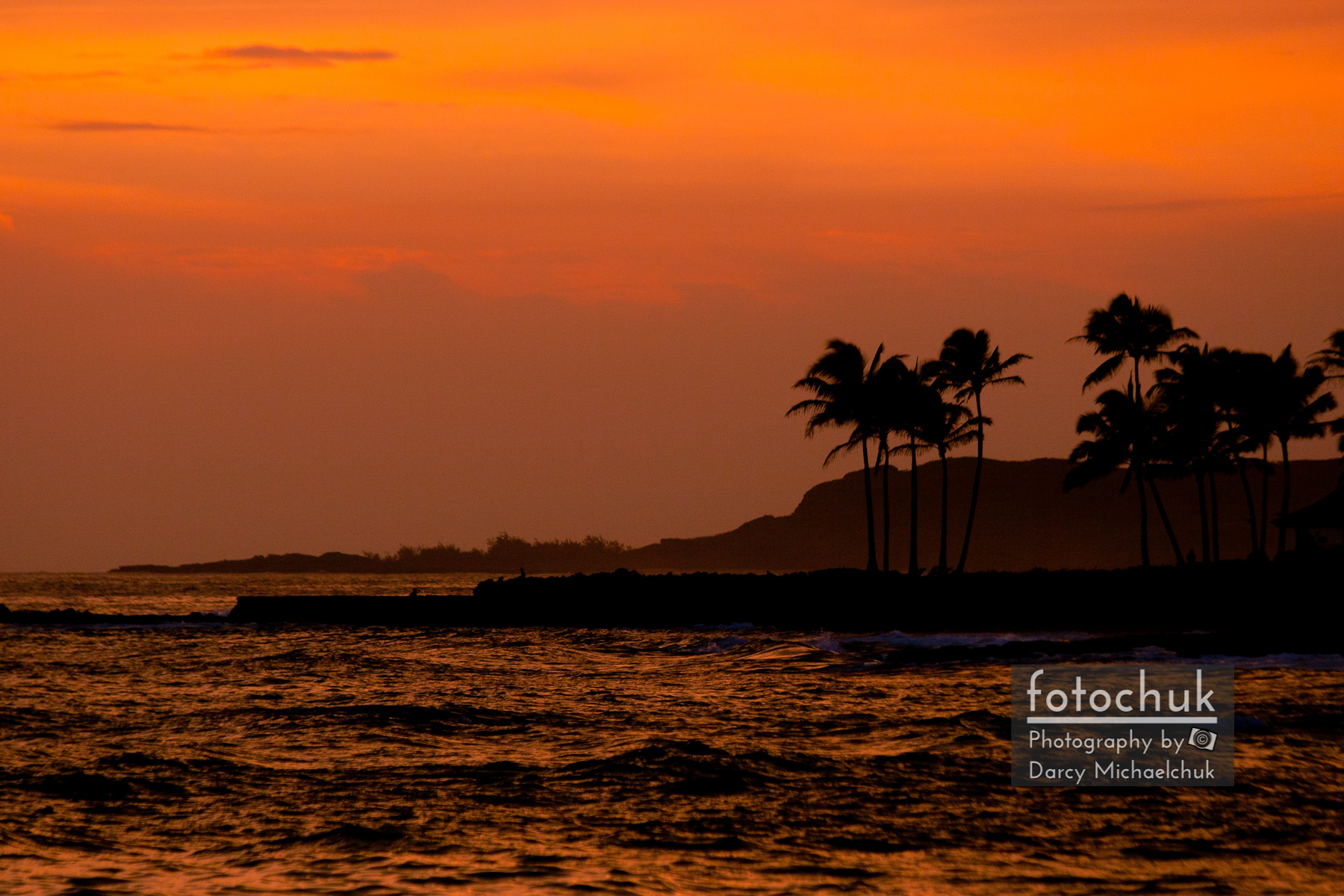 Ocean Sunset with Palm Tree Silhouette