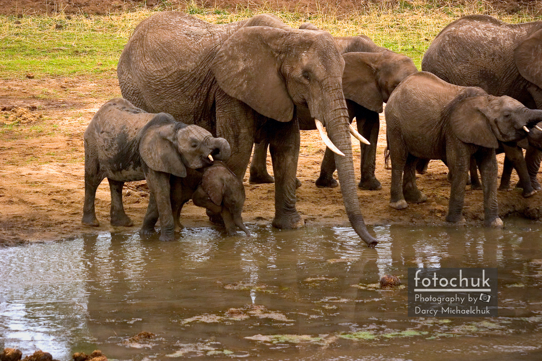 Thirsty Elephant Family