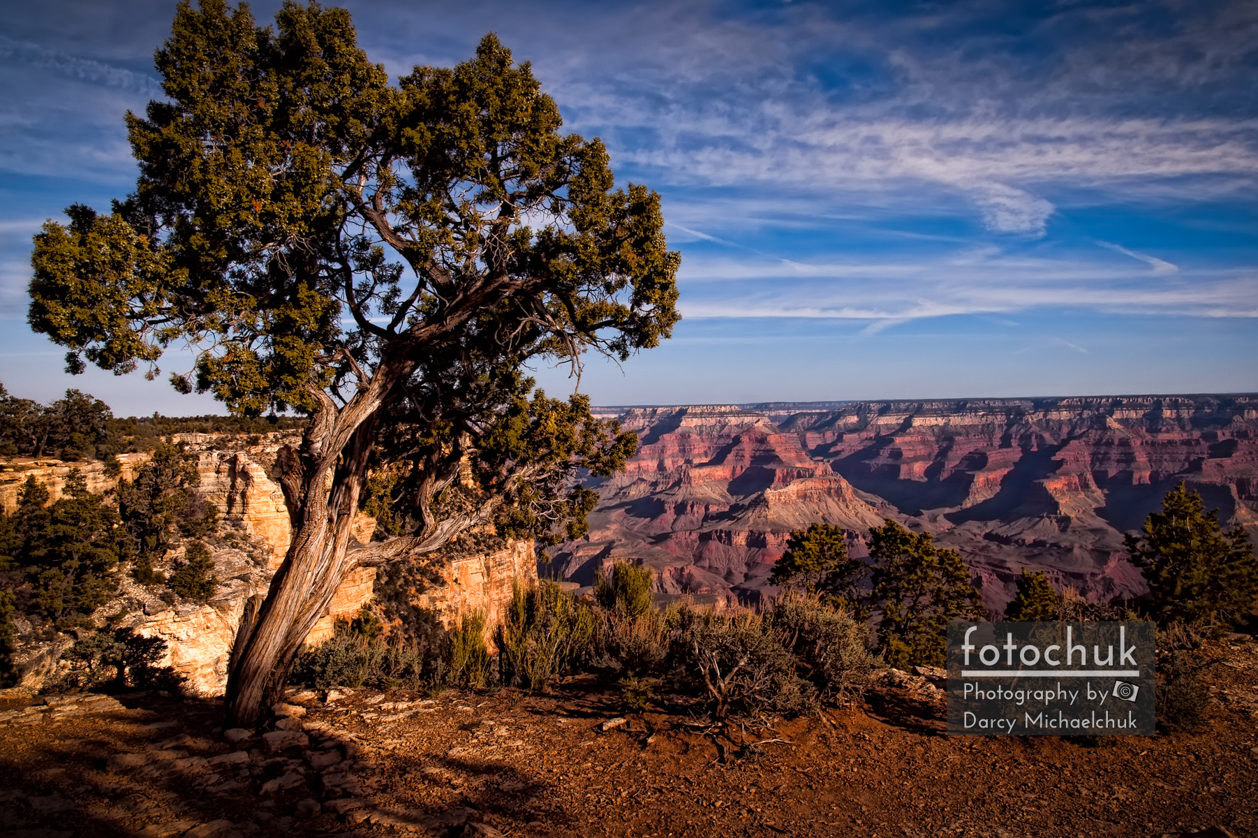 Tree Overhangs the Grand Canyon