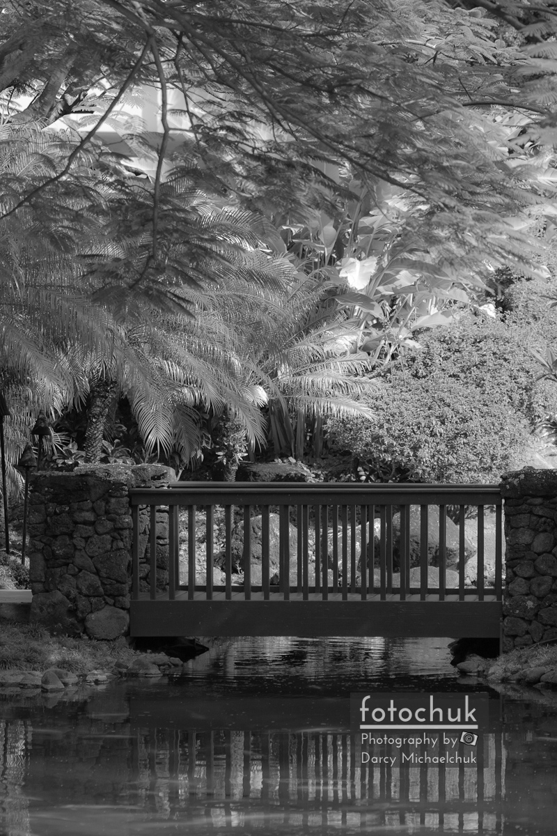 Tropical Bridge in Bw