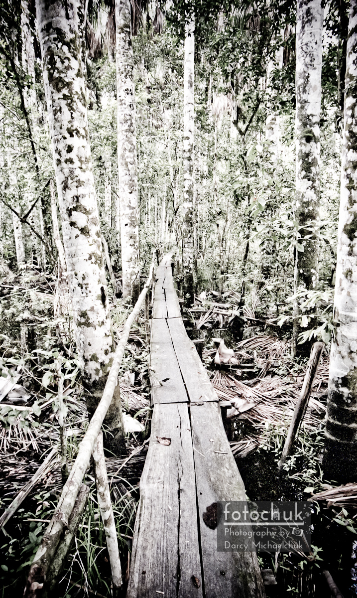 Walkway Into the Amazon