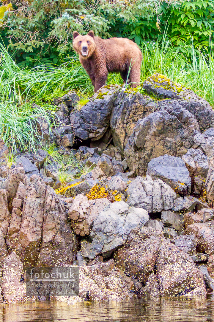 Grizzly on a Small Bluff