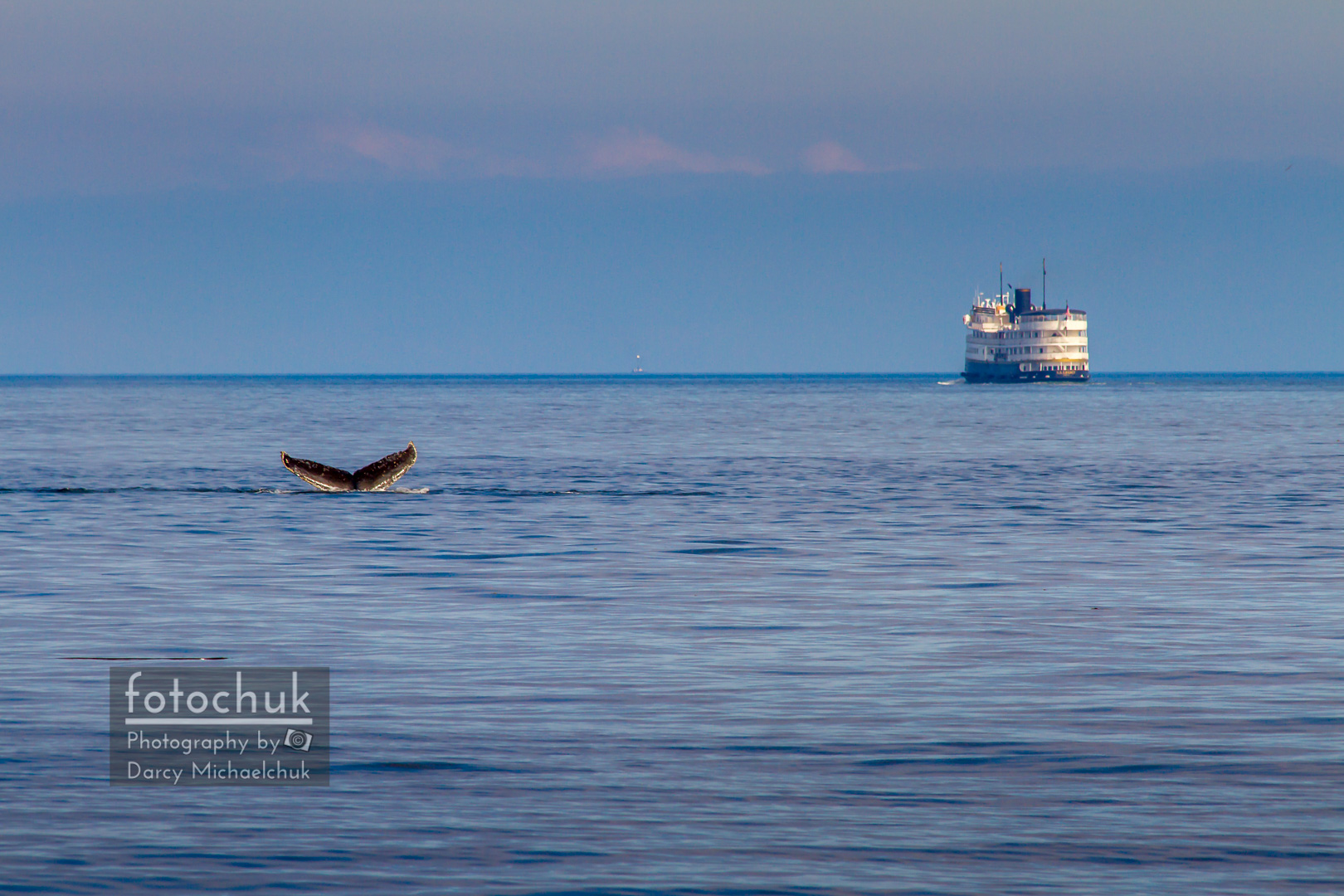 Whale Tail at Sunset in Alaska
