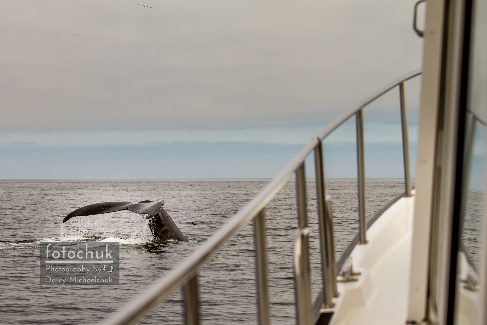 Whale Off the Port Bow