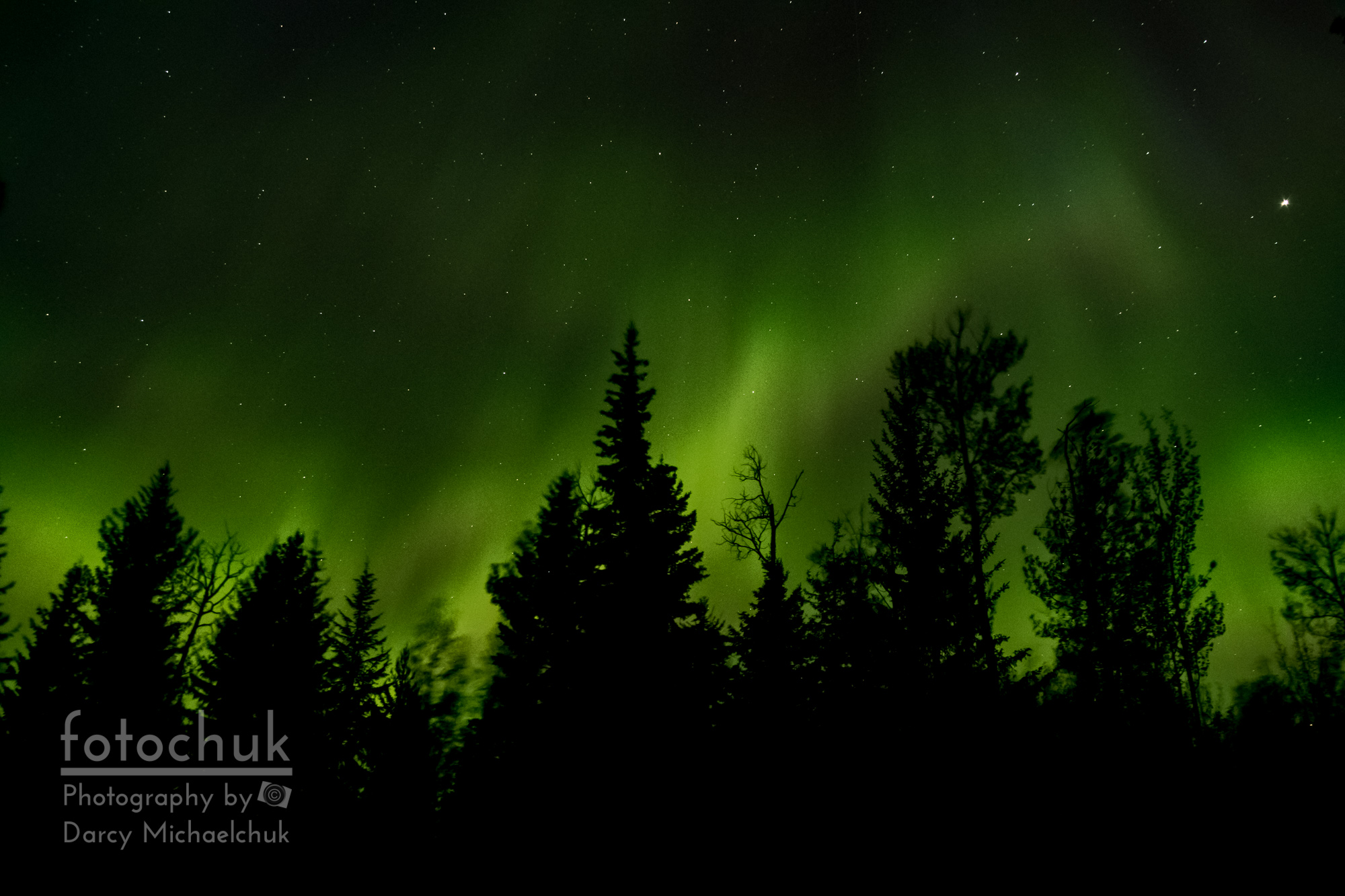 Aurora and Wind Through the Trees